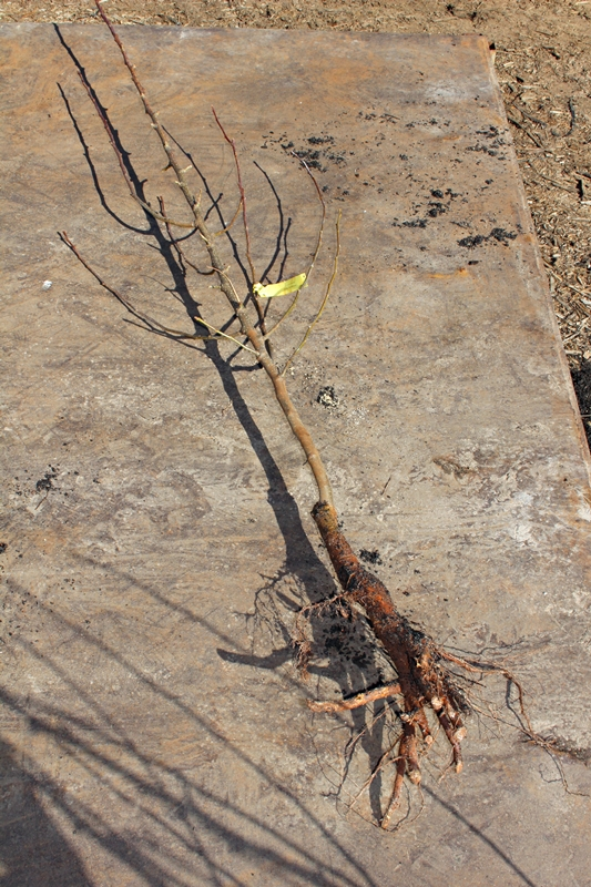 Winter Hill Tree Farm Blog