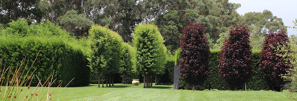 Winter hill tree farm trees for narrow spaces for Skinny trees for tight spaces