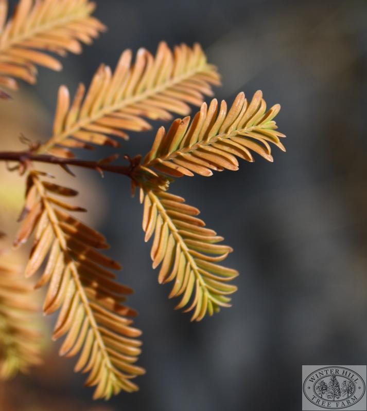 Early Autumn foliage