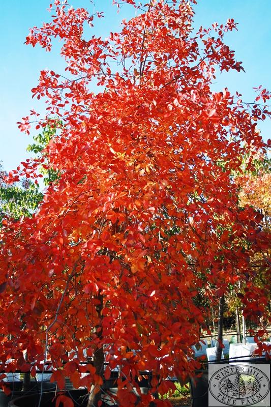 Autumn form