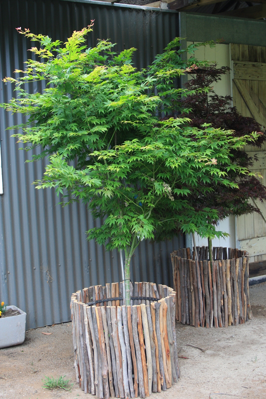 Winter Hill Tree Farm Courtyard Amp Pots