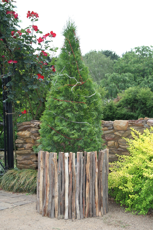 Charmant Advanced Trees For Courtyards And Mature Trees Suitable For Pots