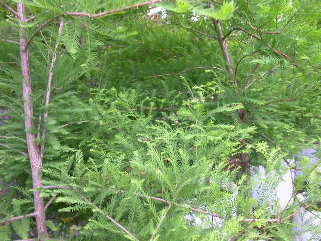 Spring/summer foliage