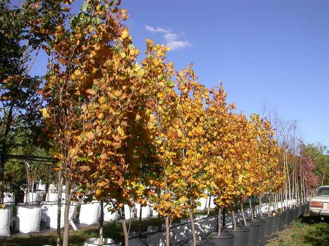Autumn 100 litre